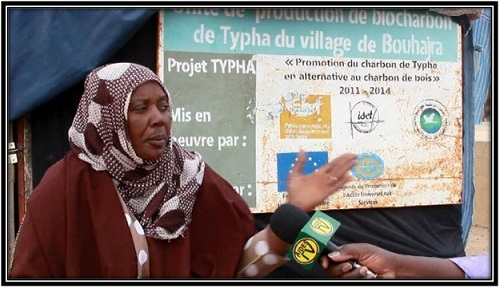 Utilisation du Typha : la solution des coopératives des femmes (Reportage)