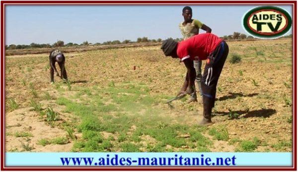 Accès des organisations agricoles au foncier